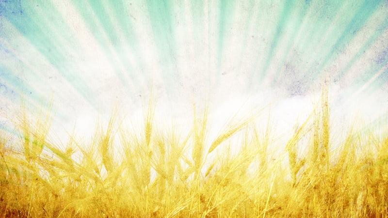 Bienvenue dans le blog de Grain de Site